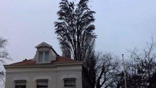 VIDEO: captan espectacular 'explosión' de un árbol hecho de pájaros