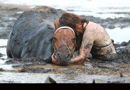 FOTOS: el angustioso rescate de un caballo atrapado en arena movediza