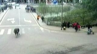 VIDEO: búfalo escapa y hiere a 14 personas en China