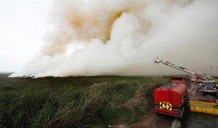 Chorrillos: incendio en Pantanos de Villa afectó el 1% del área total de la reserva