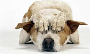 Los fuegos pirotécnicos y sus terribles consecuencias en las mascotas