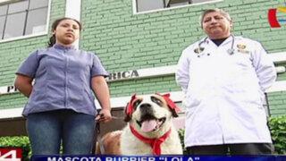 Lola, la perrita 'burrier' ya está fuera de peligro y se recupera favorablemente