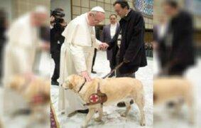 Papa Francisco afirmó que los animales sí van al cielo