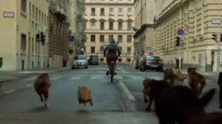 White God: esta película donde los perros se rebelan es candidata al Óscar