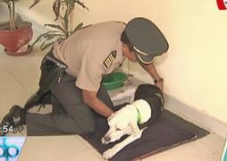 Murió 'Capitán Julio': perro recibió reconocimientos por ayudar a capturar delincuentes