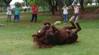 VIDEO: la inusual reacción de un caballo que fue liberado conquista las redes