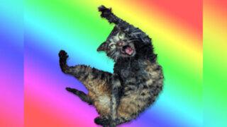 FOTOS: ¿por qué este gato se ha convertido en una estrella de Internet?