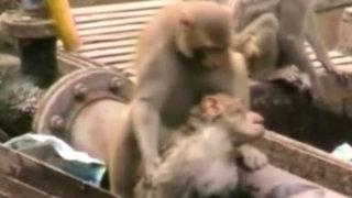 VIDEO: mono salva a compañero que cayó electrocutado a las vías del tren