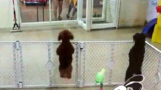 YouTube: la tierna reacción que tiene este perro al ver a su dueño conquista las redes