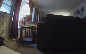 VIDEO: experimento muestra lo que hace una mascota cuando sales de casa