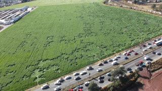 Extrañas figuras aparecieron en un campo de cultivo en México