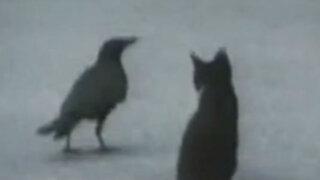 YouTube: esta historia de amistad animal te hará empezar el año con una sonrisa