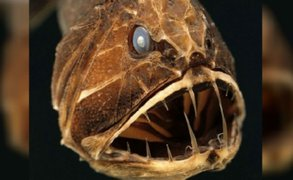 Las 12 criaturas más aterradoras que habitan en el fondo del océano