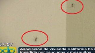 VES: Asociación de vivienda California ha sido invadida por zancudos y mosquitos