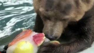 Brasil: animales de zoológico combaten el calor con helados