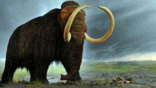 Un científico estadounidense pretende devolver a la vida a los mamuts