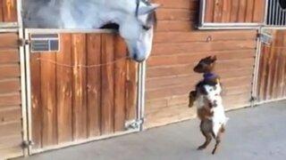 YouTube: la tierna 'pelea' entre una cabra y un caballo se volvió viral en las redes