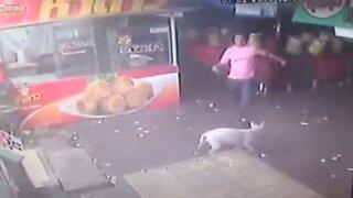 Sujeto recibe inesperada lección luego de intentar agredir a un perro