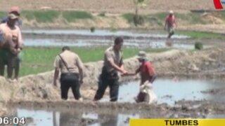 Tumbes: rescatan a cinco menores explotados en campos arroceros