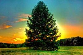 Mantén tus ojos fijos en este frondoso árbol… lo que pasa después hará volar tu mente