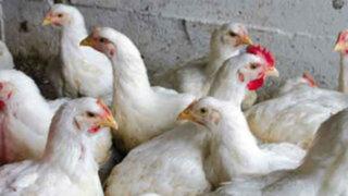 Israel: científicos desarrollan carne pollo en laboratorio