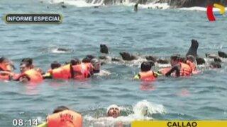 Islas Palomino: una extraordinaria aventura acuática con lobos marinos