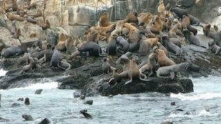 Un recorrido por las Islas Palomino, la alucinante tierra de los lobos marinos