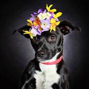 Una fotógrafa logra que adopten a perritos abandonados tomándoles lindas fotos