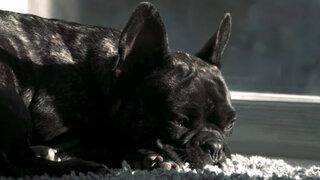 Amarás aún más a tu perro luego de ver este conmovedor comercial