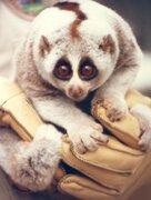 10 animales extremadamente tiernos que pueden matarte