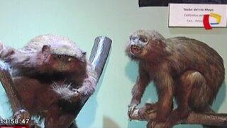 El Museo de Historia Natural cumple 97 años de creación