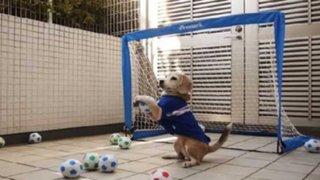 YouTube: perro sorprende con su habilidad para atajar penales
