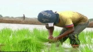 Los niños del arroz: trabajo infantil en Tumbes