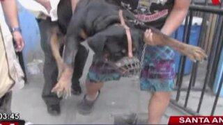Niño que fue mordido por Rottweiler permanece en estado grave
