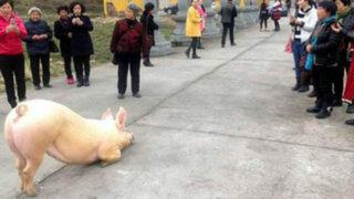VIDEO: cerdo sorprende a fieles al arrodillarse durante horas frente a un templo