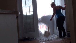 Viral: mira cómo un gato rompe un muro de nieve para alcanzar su comida