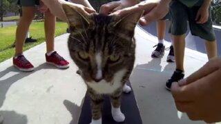 YouTube: gato causa sensación con su asombrosa habilidad para el skate