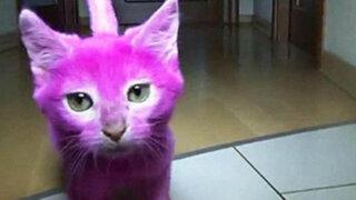 Polémica: actriz rusa tiñe a su gata de rosa para que haga juego con su vestido