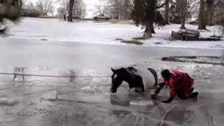 YouTube: mira el emotivo rescate de un caballo atrapado en un lago congelado