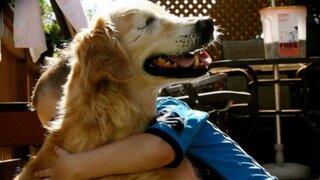 Canadá: conoce al perro ciego que ayuda a las personas con discapacidad
