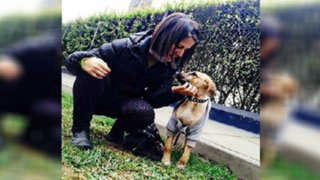 Eva Bracamonte crea albergue temporal para perros abandonados