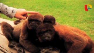 La Isla de los Monos: refugio en la Amazonía lucha contra tráfico de animales