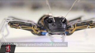 Alemania: científicos crearon hormigas mecánicas para ser utilizadas en fábricas