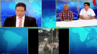 Exigen sanción para funcionarios del Ministerio de Agricultura por muerte de vicuña