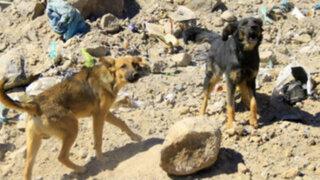 Arequipa: alerta por rabia canina en cuatro distritos
