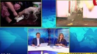Perros abandonados desde hace meses: varios canes murieron por falta de alimentación