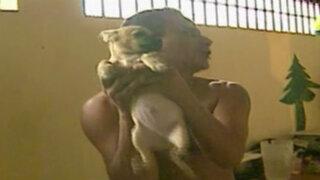 Denuncian que perros son utilizados sexualmente en penal de Lurigancho