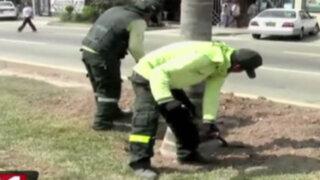 Trasladan 28 palmeras de avenida 28 de Julio a otras zonas de Lima