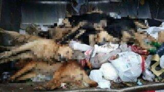 Denuncian envenenamiento masivo de perros en Punta Hermosa