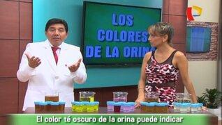 Doctor en Familia : ¿Qué dice el color de la orina sobre tu salud?